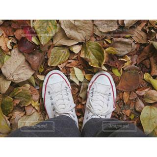 落ち葉の絨毯の写真・画像素材[923361]