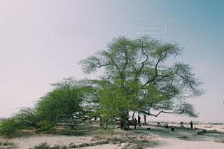 生命の木の写真・画像素材[1040062]