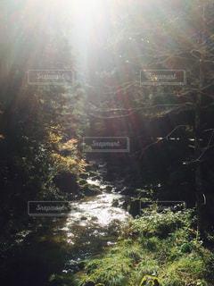 森のビューの写真・画像素材[923731]