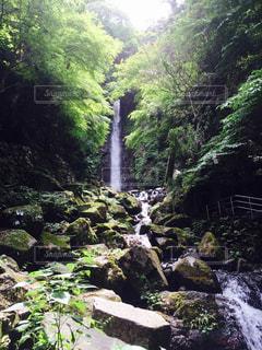 森の中の大きな滝の写真・画像素材[923750]
