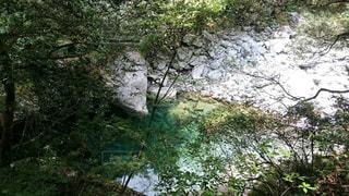 深い緑の川の写真・画像素材[923942]