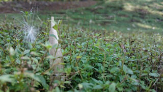 小人目線の世界の写真・画像素材[924210]