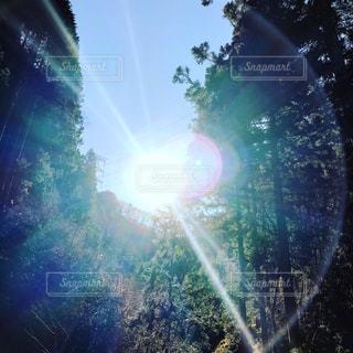 陽の光の写真・画像素材[939742]