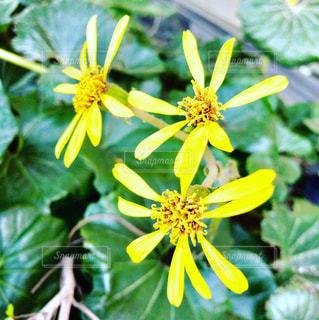 花の写真・画像素材[954384]