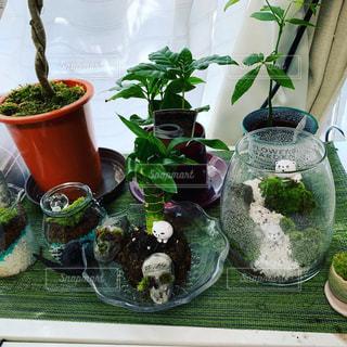 鉢の中の植物の写真・画像素材[2417161]