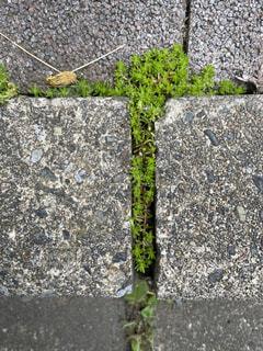 苔くんの写真・画像素材[4320792]