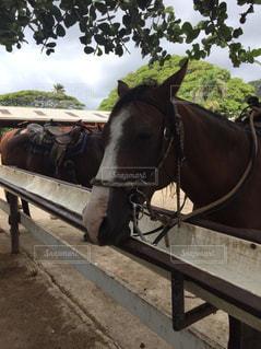 馬車を引いている馬の写真・画像素材[924848]
