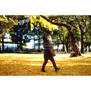 秋の歓びの写真・画像素材[966234]