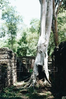 樹木の写真・画像素材[3945486]