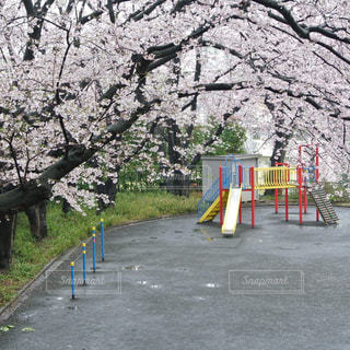 桜と公園の遊具の写真・画像素材[924603]
