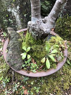近くの木のアップ コケの写真・画像素材[989212]