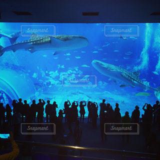 美ら海水族館のジンベイザメの写真・画像素材[925750]