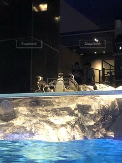 ペンギン会議の写真・画像素材[1312445]