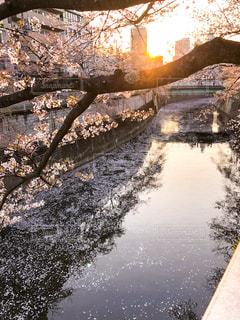 川に架かる橋の写真・画像素材[1190263]
