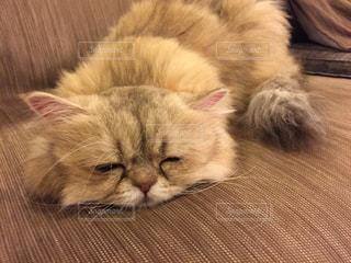 眠い猫の写真・画像素材[926731]