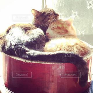 仲良くお昼寝する猫 - No.926732