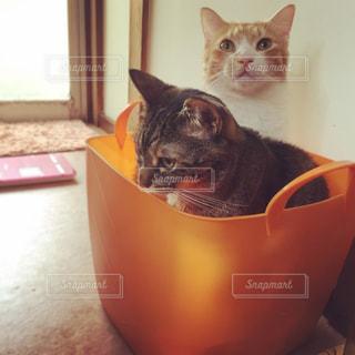 洗濯カゴで遊ぶ猫 - No.926983