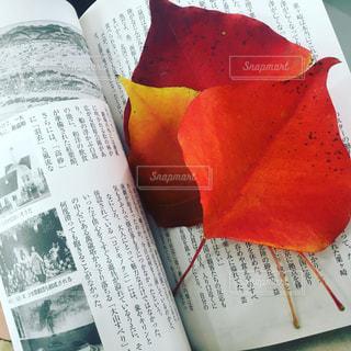 秋の写真・画像素材[928830]