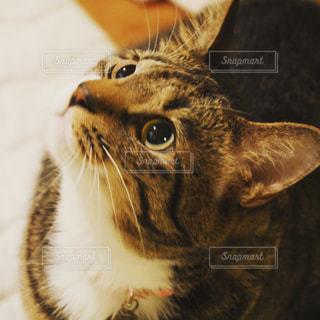 猫の写真・画像素材[928831]