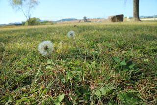 近くに緑豊かな緑のフィールドのの写真・画像素材[927142]