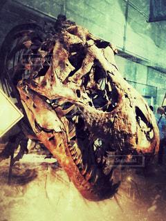 恐竜展 ティラノサウルスの写真・画像素材[927369]