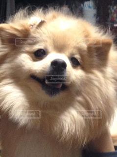 ブサイク犬 - No.927762