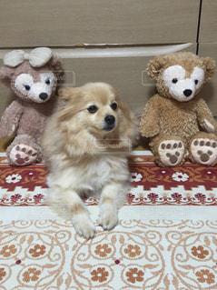 犬の隣に座っているテディー ・ ベアのグループ - No.931138