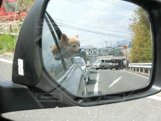 車のサイドビュー ミラー出かける犬 - No.1102604