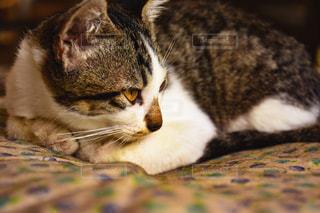 子を見つめる母猫の写真・画像素材[933670]