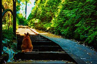 黄昏地元猫の写真・画像素材[938678]