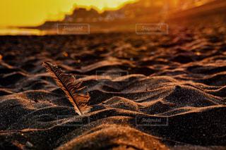 夕焼けに染まる羽の写真・画像素材[938682]