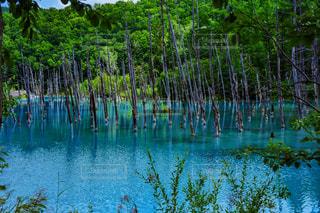 青い池の風景の写真・画像素材[949126]