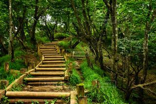 登山道の風景の写真・画像素材[949135]