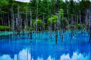 青い池の風景の写真・画像素材[949152]