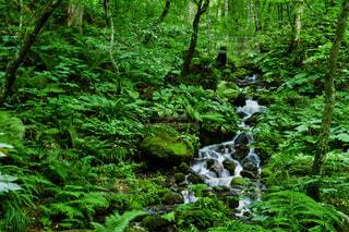渓流の景色の写真・画像素材[959664]