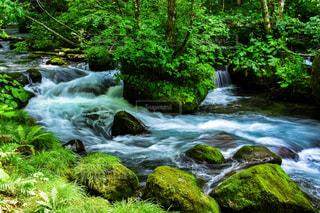 渓流の景色の写真・画像素材[959666]