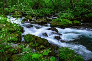渓流の景色の写真・画像素材[959722]