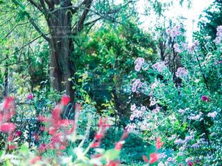 花の写真・画像素材[332572]