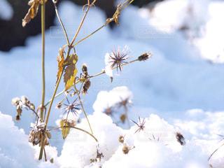 雪の写真・画像素材[332584]