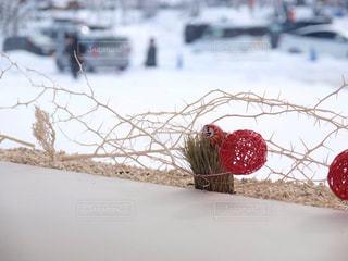 冬の写真・画像素材[332596]