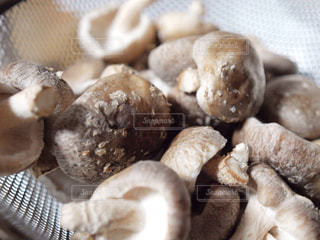 椎茸の写真・画像素材[333265]