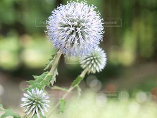 花の写真・画像素材[336293]