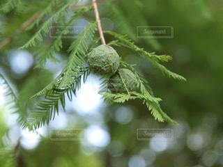 木の写真・画像素材[336673]