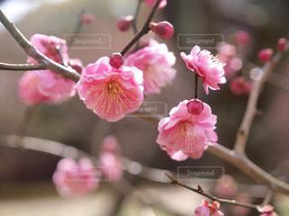 花の写真・画像素材[337417]