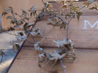 植物 - No.345108