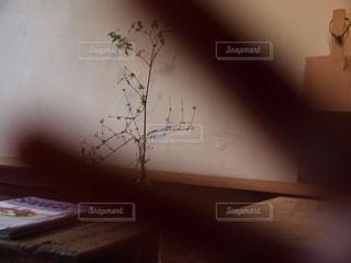 カフェの写真・画像素材[345867]