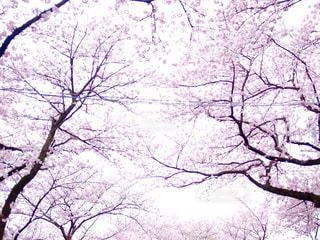 春の写真・画像素材[375196]