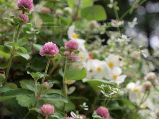 花の写真・画像素材[376241]