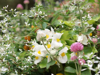 花の写真・画像素材[376243]
