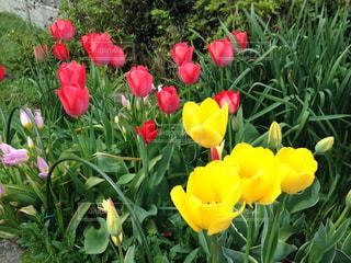花の写真・画像素材[424476]